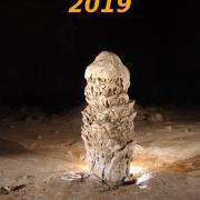 Bonné année 2019 à toutes et tous !!!
