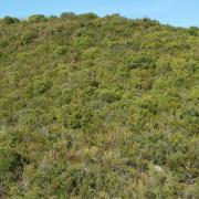 panoramique du ravin vu depuis l'entrée