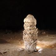 Une stalagmite ... parmi d'autres